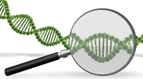 Xét nghiệm ADN ở đâu luôn là câu hỏi đặt ra của nhiều người